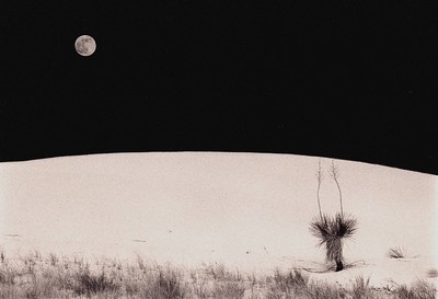 Yucca Moon, White Sands, New Mexico