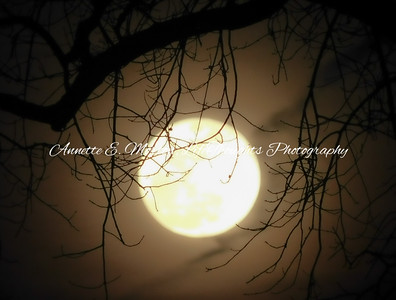 """""""Mysterious Moon"""" Northeast Batimore MD"""