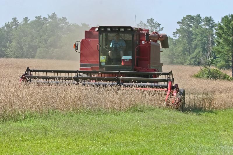 Grain Harvest on Maclaughlin Road