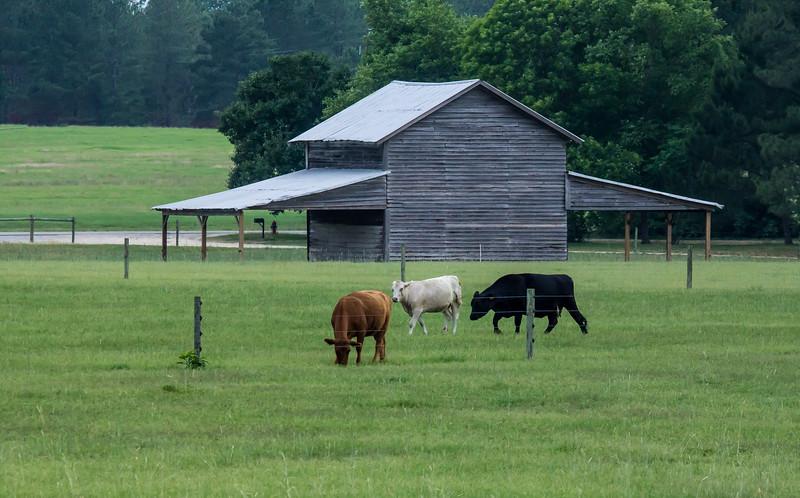 John German-Popes Barn on McLaughlin Rd-2