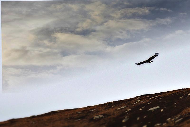 Sea Eagle.jpeg