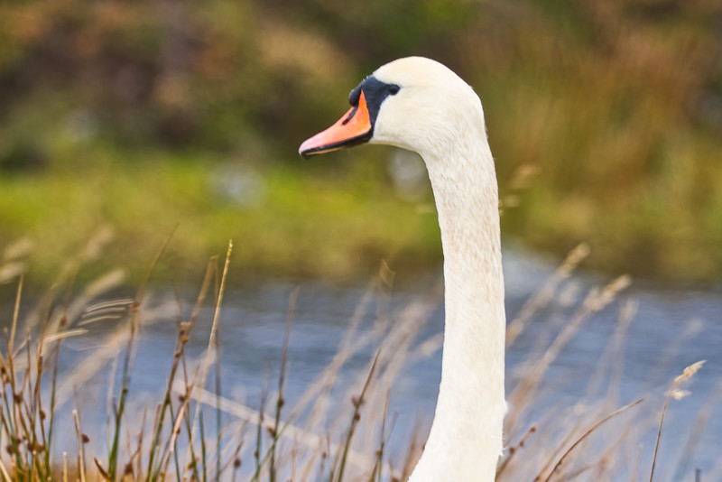 Swan neck.jpeg