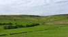 Pastviny v kopcoch okolo Lonsdale
