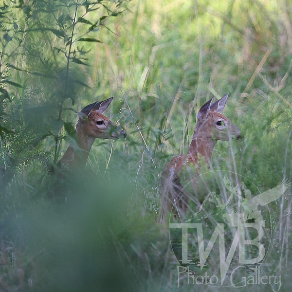 twin lookouts