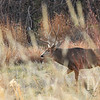 a fall stroll, for this large buck