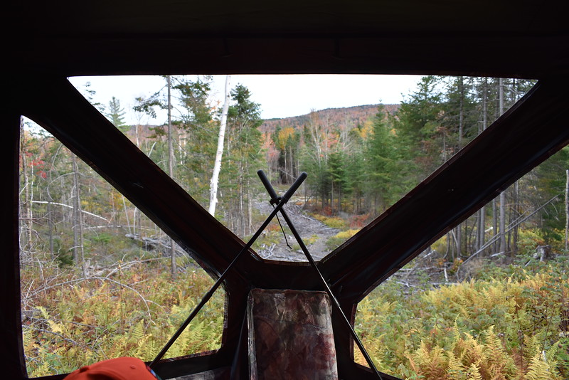 There are many angles visible as a shooting stick waits against the background of a ground blind overlooking a moosey-looking cut during the 2017 moose hunt in Somerset County. (Pete Warner | BDN)