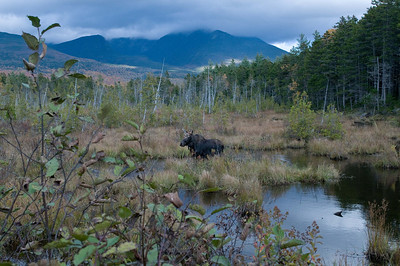 Baxter State Park - Maine [off road leading to Daicey Pond; Katahdin in background]