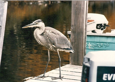 GBH on the Tall Timber dock