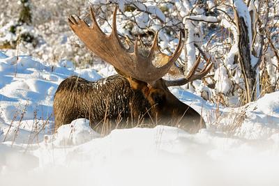 Winter Absolution