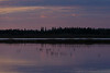 Reflections of geese taking off from sandbar before sunrise.