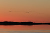 Geese down the Moose River from Moosonee before sunrise.