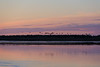 Geese taking off from sandbar in the Moose River shortly before sunrise.