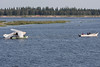 Cessna U206G C-GRVX heads up the Moose River after being righted and towed off the sandbar.