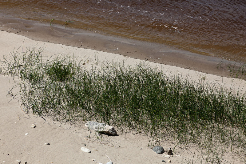 Grass and sand along shore of Charles Island