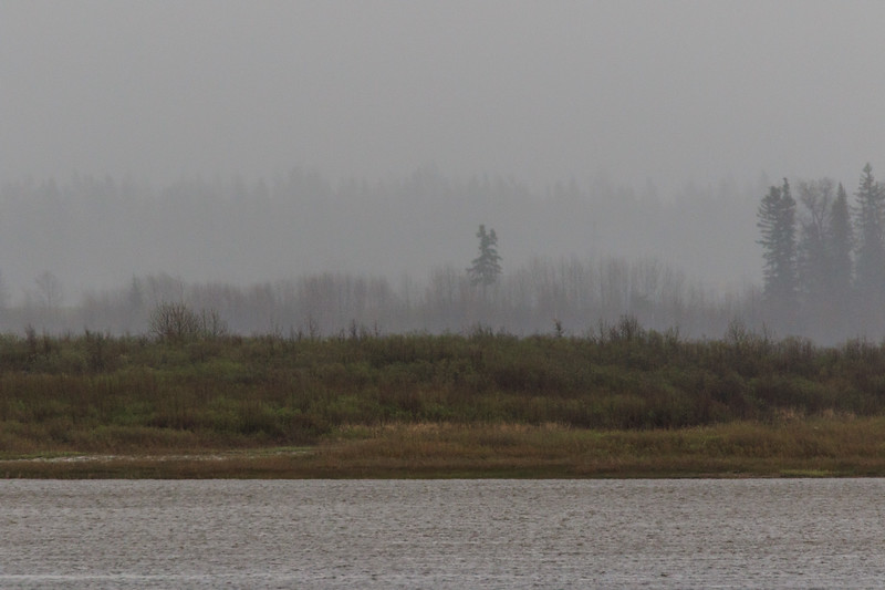 Looking across the Moose River in the rain to island trees, distant ones more obscured. Dark shot.