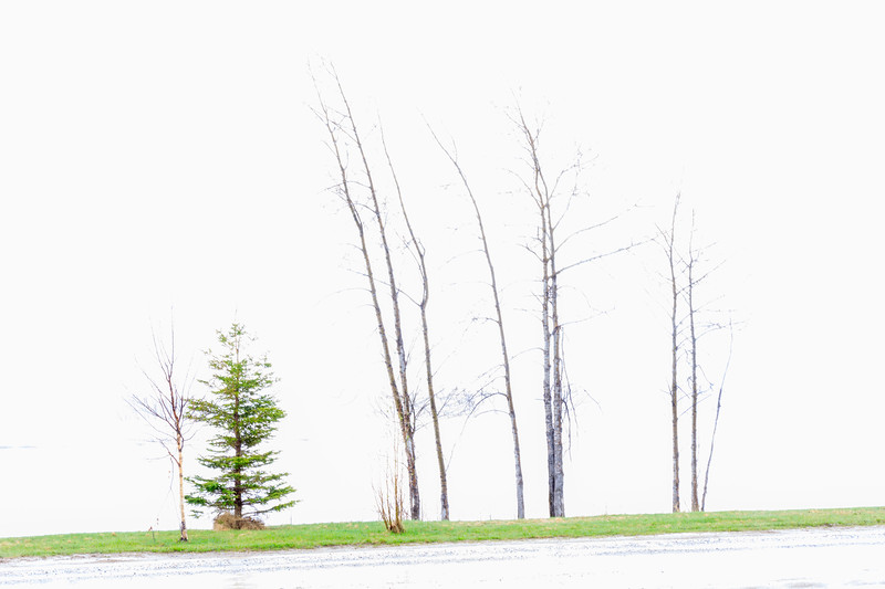 Trees along the Moose River in rain. Timed exposures.