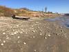 Exceptionally low tide in Moosonee.
