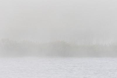 Foggy Morning 2017 August 11th