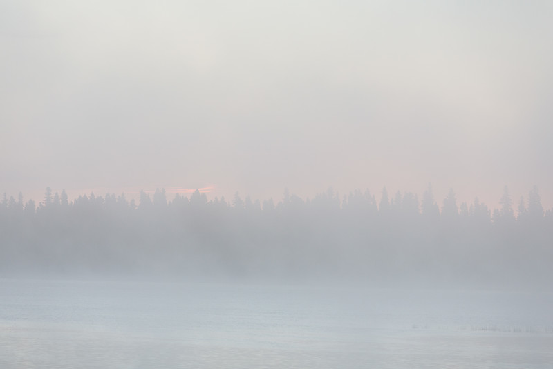 First hint of sunrise above the trees of Butler Island on a foggy morning.
