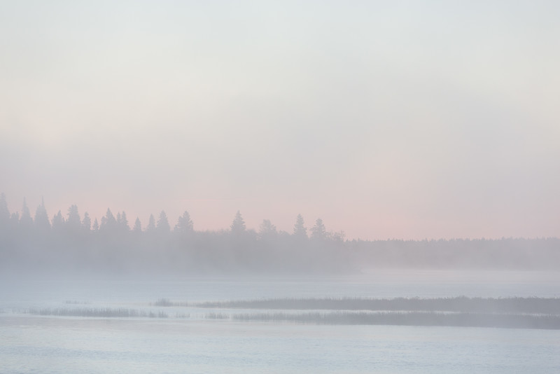 Trees silhouetted against the fog before sunrise.