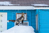 Fox starting jump to roof. 3/8