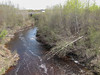 Beavers have been busy, looking down Store Creek from railway bridge towards Atim Road bridge. 2007 May 28th.
