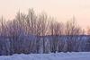 Trees along Revillon Road North in Moosonee at sunset