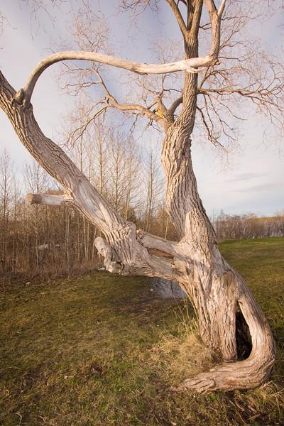 Tree trunk near ball diamond