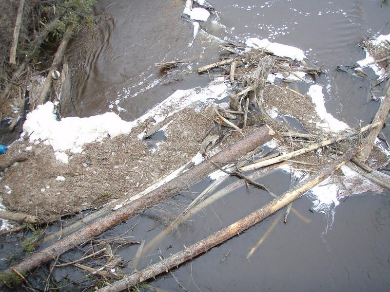 Debris in Store Creek after spring runoff