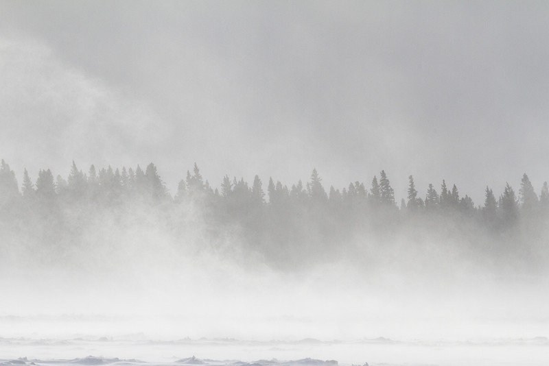 Snow blowing on the Moose River at Moosonee. Snow billowing higher than the trees.