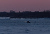 Snow groomer working on the winter road across the Moose River before sunrise at Moosonee.