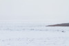 Looking up the Moose River from Moosonee in blowing snow. Towards hydro towers.