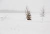Tees along the Moose River, looking towards Butler Island. Moderate snow.