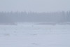 In blowing snow, looking up the Moose River.