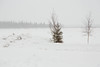 Trees and snow along the Moose River in Moosonee looking towards the south end of Butler Island.