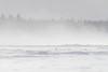 Snow blowing on the Moose River at Moosonee.