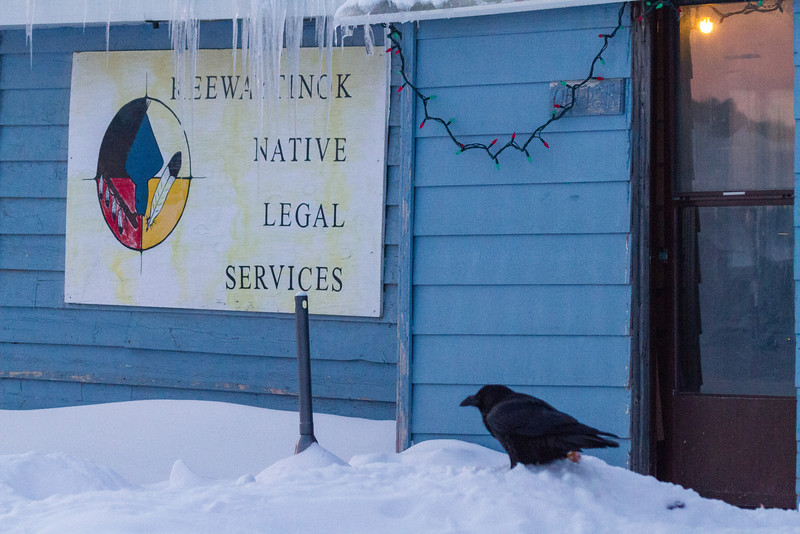 Raven waiting for food outside Keewaytinok Native Legal Services.