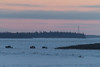 Traffic on the winter road across the Moose River coming from Moose Factory to Moosonee. 2013 December 16