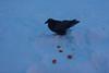Raven here for breakfast.