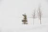 Trees along Revillon Road in snow.