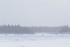 Looking across the Moose River from Moosonee towards the Gutway.