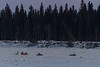 Activity out on the ice in front of Butler Island across from Moosonee.