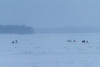 Snowmobiles and sleds travelling between Moosonee and Moose Factory.