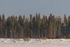 Trees on Butler Island.