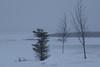 Trees along the Moose River in Moosonee.