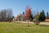 One of the few red trees in Moosonee.