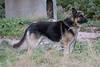 Guard dog behind Moosonee Lodge.