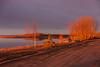 Trees along the Moose River at sunrise.