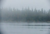 Butler Island trees on a foggy morning from Moosonee. Black minus 90 applied to widen tonal range of image