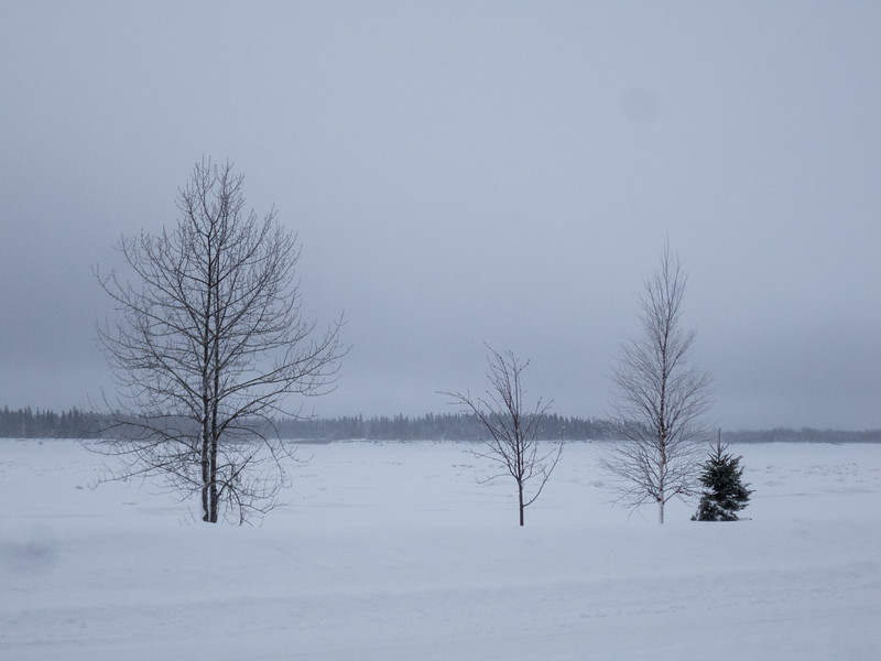 Trees along the Moose River on a cloudy morning.